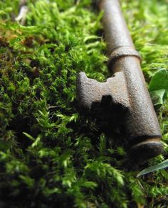 Hey, I found this really awesome Etsy listing at https://www.etsy.com/listing/67755266/old-key-photography-moss-green-rustic