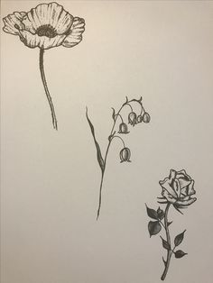 Pen Ink sketches of (left to right) poppy, lily of the valley and rose.