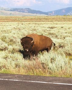 Bison is the fastest growing meat market in the United States today, as more and more consumers discover the delicious taste and many health and environmental benefits of bison meat. In 2007, consumer demand for bison meat grew 17 percent, the...