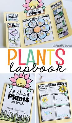 Teachers, when spring is in the air have your learners complete this plant lapbook to learn how plants grow in our world and why these plants are important to us. I love using interactive lapbooks in the classroom! They are fun to create, engaging and can be used throughout the year to review skills taught. #Lapbooks #Spring #Plants #plantlapbook #interactivelapbooks #handsonlearning #mrsjonescreationstation