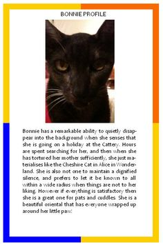 Bonnie's profile and cats in pool tables
