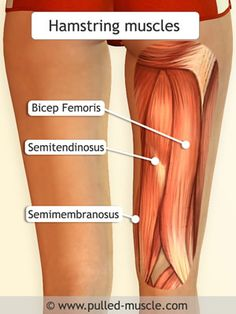 Hamstring strains usually occur during exercise, especially exercises that consist of running and jumping or other sudden movements.Forgetting to warm-up and stretch before exercising can also cause hamstring pulls. Gross Anatomy, Human Anatomy, Hamstring Muscles, Hamstring Tear, Musculoskeletal System, Muscular System, Muscle Anatomy, Skeletal Muscle, Anatomy Study