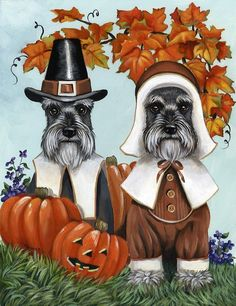 Thanksgiving dogs. Pilgrim Schnauzers