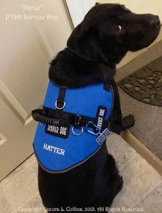 Wounded Warrior Service Dog Vest