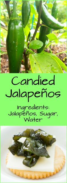 Easy and Most Delicious Candied Jalapenos recipe there is! All you need is jalapenos, sugar and water! They are sweet and spicy! Also known as Cowboy Candy!