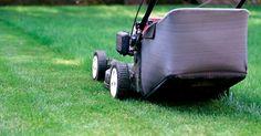 Ein Rasen verlangt regelmäßige Pflege, damit er dicht und unkrautfrei bleibt. Dabei spielen das Rasenmähen und die richtige Schnitthöhe eine entscheidende Rolle. Wir zeigen Ihnen, wie man hierbei typische Fehler vermeidet.