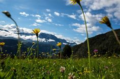 In summer, hiking trails through forests and flower-filled meadows beckon, and enticing meals are never far away.