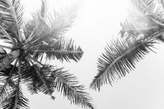Summer Vibes - Art Print | Palm Trees | Black and White | Photography