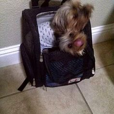 Snoozer Roll Around Pet Carriers! - Airline Approved! - http://snoozerpetproducts.com/dog-beds-carriers/pet-auto-travel-c-26/pet-carriers-purses-c-26_35/