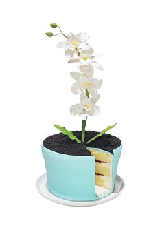 """Have your flower and eat it, too. Masquerading as a potted plant, this sweet treat is actually vanilla cake layered with luscious vanilla mousse and raspberry preserves and topped with chocolate-cake """"dirt"""" and sugar orchids."""