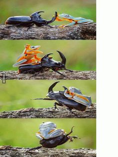 Funny pictures about Little Froggy Rodeo. Oh, and cool pics about Little Froggy Rodeo. Also, Little Froggy Rodeo photos. Animals And Pets, Funny Animals, Cute Animals, Farm Animals, Beautiful Creatures, Animals Beautiful, Animal Pictures, Funny Pictures, Funny Pics