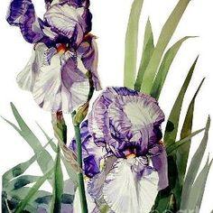 Квіти Ирисы