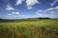 Poppies popping up... by TRM-photography.co.uk, via Flickr