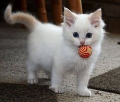 Do you like my ball?……….let's play!