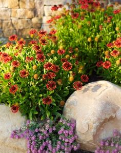 These Vibrant Color Palettes are Perfect for Summer Gardens: http://qoo.ly/gqt9w #SummerGarden #GardenIdeas
