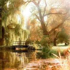 This is so beautiful. I've always wanted a Weeping Willow tree with a pond in my backyard <3