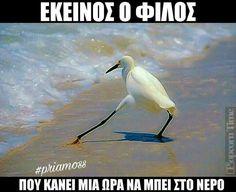 Εγω, η θαλασσολυκαινα λολ Memes Humor, Funny Images, Funny Photos, Stupid Funny Memes, Hilarious, Funny Greek, Funny Statuses, Funny Bunnies, Greek Quotes