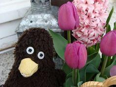 Erwin mag Frühlingsblumen.