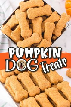 It is so easy to make these tasty Pumpkin Dog Treats using only healthy, safe and nutritious ingredients--no preservatives or additives, just pure wholesome goodness. In under 30 minutes, you can spoil your dog with these homemade treats that are pup-approved and loved by even the pickiest pets! Dog Biscuit Recipes, Dog Treat Recipes, Dog Food Recipes, Snack Recipes, Pumpkin Recipes For Dogs, Fall Recipes, Delicious Recipes, Homemade Dog Treats, Healthy Dog Treats
