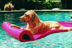 """While many people enjoy the cool comfort of the air conditioning at work, what about the pets? This article offers some quick tips to make sure your pets are as comfortable as possible during the """"dog days of summer."""""""