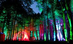 The vivid colors against the backdrop of the forest and the late day sky are simply rapturous. Looks like a hell of a fun place to be.  Electric Forest Music Festival, Rothbury, Michigan.