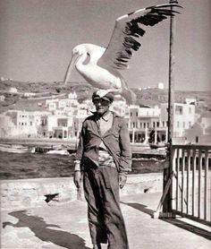 "illvedere: "" Birdman of Mykonos. """