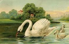 Image result for swan drawing