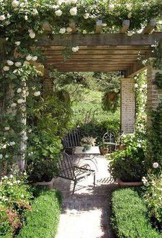Lovely arbor with white climbing roses