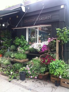 A florist, that is decorated like a fantasy universe. The most beautiful one in Copenhagen. Its located at Værnedamsvej.