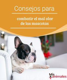 Consejos para combatir el mal olor de las mascotas  Os contamos unos cuantos consejos prácticos para evitar el mal olor de las mascotas y disfrutar de un ambiente limpio. Toma nota si tienes ese problema. #olor #combatir #consejos #limpio