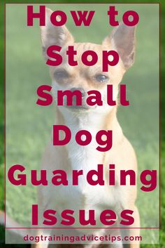 How to Stop Small Dog Guarding Issues | Dog Training Tips | Dog Obedience Training | Dog Training Ideas | http://www.dogtrainingadvicetips.com/stop-small-dog-guarding-issues