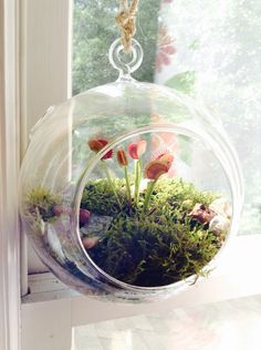 DIY Hanging Terrarium Planter: gravel, mosses, some decorative pebbles...hang it with braided twine! Ideal for venus flytraps in the window.