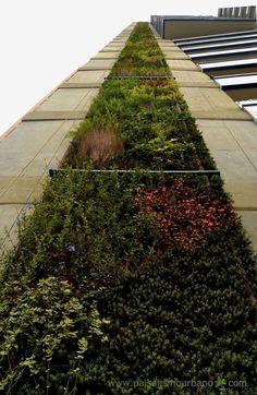 Fachada vegetal de exteriores JARDIN VERTICAL GREEN BUILDING, MEDELLIN Paisajismo Urbano
