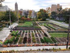 Michigan Urban Farming Initiative. 7432 Brush St 313-444-6834