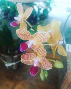 Bela orquídea multicor em Inhotim.