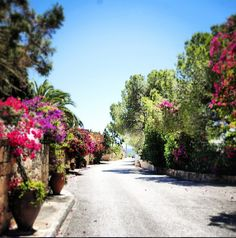 Road surrounded by beautiful #flowers. #ibiza