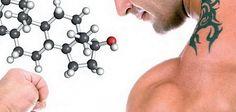 Стать самцом: как повысить уровень тестостерона подручными средствами