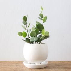ayanas | Rakuten Global Market: Succulents and green drum (three foot Pot)