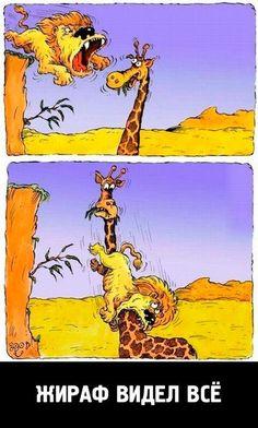 жираф и лев