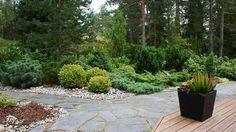 Metsäinen puutarha