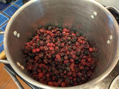 Blackberry Wine, Blackberries, Organic Gardening, Acre, Vines, Fit, Photos, Blackberry, Pictures