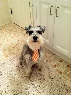 Moby in his business attire
