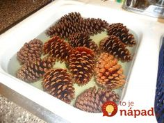 making scented pinecones-pine cones soaking in warm water Autumn Crafts, Nature Crafts, Christmas Projects, Holiday Crafts, Pine Cone Art, Pine Cone Crafts, Rustic Christmas, Christmas Holidays, Christmas Wreaths