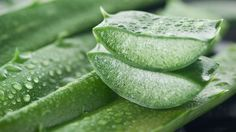 Aloe Vera is one of the oldest living plants in the world. The list of health benefits of Aloe Vera is endless. It has natural antioxidants, enzymes, vitamins, amino acids, and anti-inflammatory properties to keep you away from infections. Herbal Remedies, Home Remedies, Natural Remedies, Health Remedies, Aloe Barbadensis Miller, Dark Spots On Face, Aloe Vera For Hair, Aloe Vera Gel For Hair Growth, Natural News