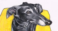 Cherry the greyhound. This colour pencil drawing is 11 x 8 inches approx.  https://www.etsy.com/listing/216347712/custom-pet-portrait-by-jim-griffiths?ref=shop_home_feat_1