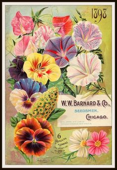 """Beautiful art print Vintage Seed Pack Image Wall Decor UnframedPrint is Unframed 8.5 x 11"""" Ready for framing . Professionally printed on medium weight cardstoc"""