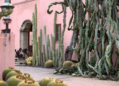 This is my style all the way. (pink house & Santa Barbara cactus monsters)