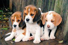 Seid ihr süüüüüß, so niedlich anzusehen die knuffigen Hundebabys.