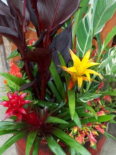 Beautiful tropical plants~ I love bromeliads!!I Perfect garden container for a patio, porch or garden. I just fell in love :-)