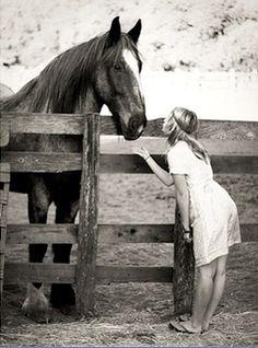 horses horses horses.